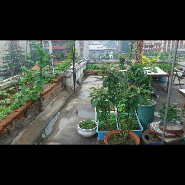 菜园平面图素材