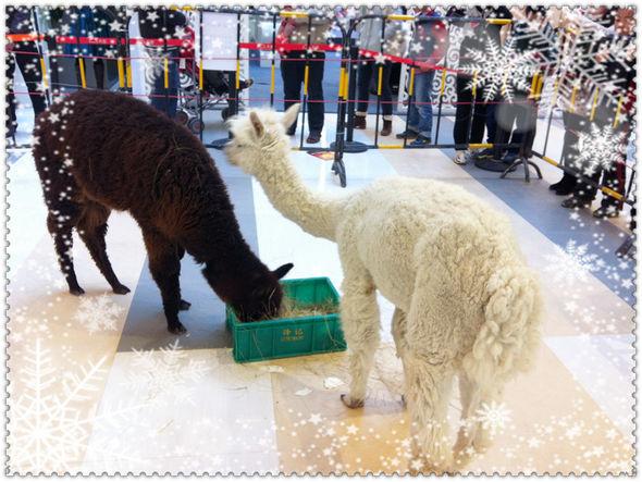 羊驼动物头像图片大全
