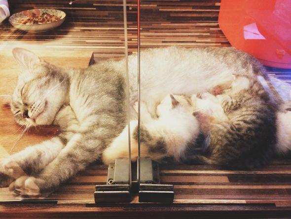 喵先生貓咖啡館