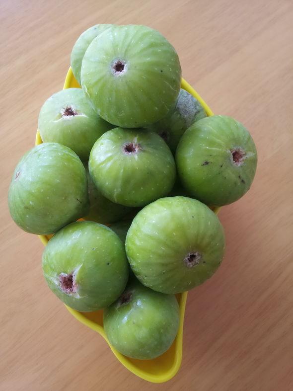 无花果春秋各结一次果实,春天的果实大,秋天的果实小,但是秋果更加